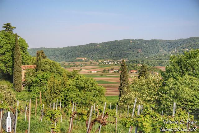 Foto Evento Wine Embassy – Fattoria le Vegre 17