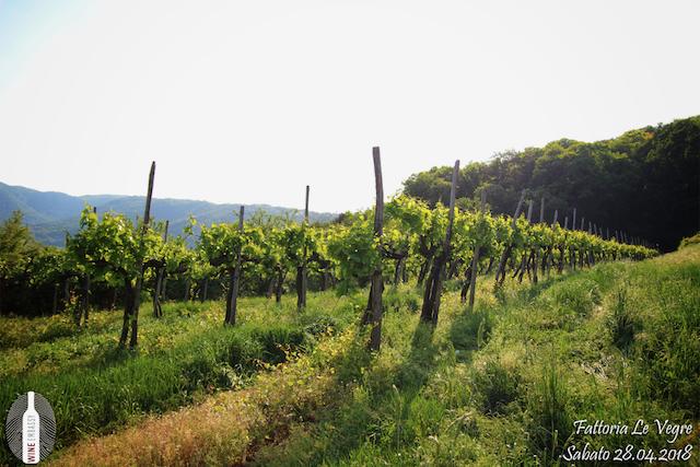 Foto Evento Wine Embassy – Fattoria le Vegre 19