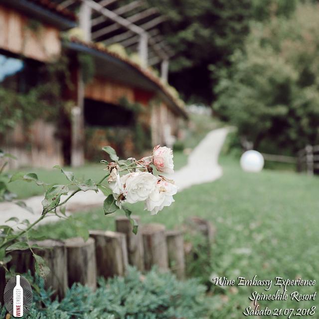 foto Evento Wine Embassy – Spinechile 3