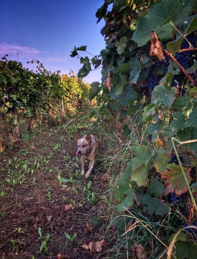 foto Evento Wine Embassy – Vendemmia Maraveja 15 sett. 1