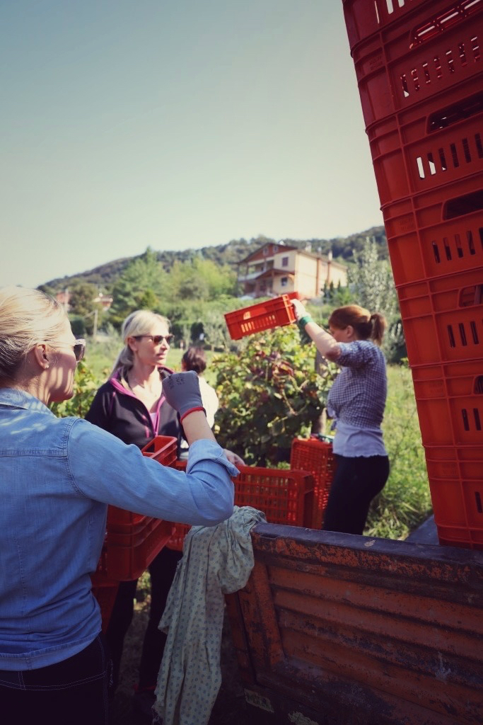 foto Evento Wine Embassy – Vendemmia Maraveja 15 sett. 18