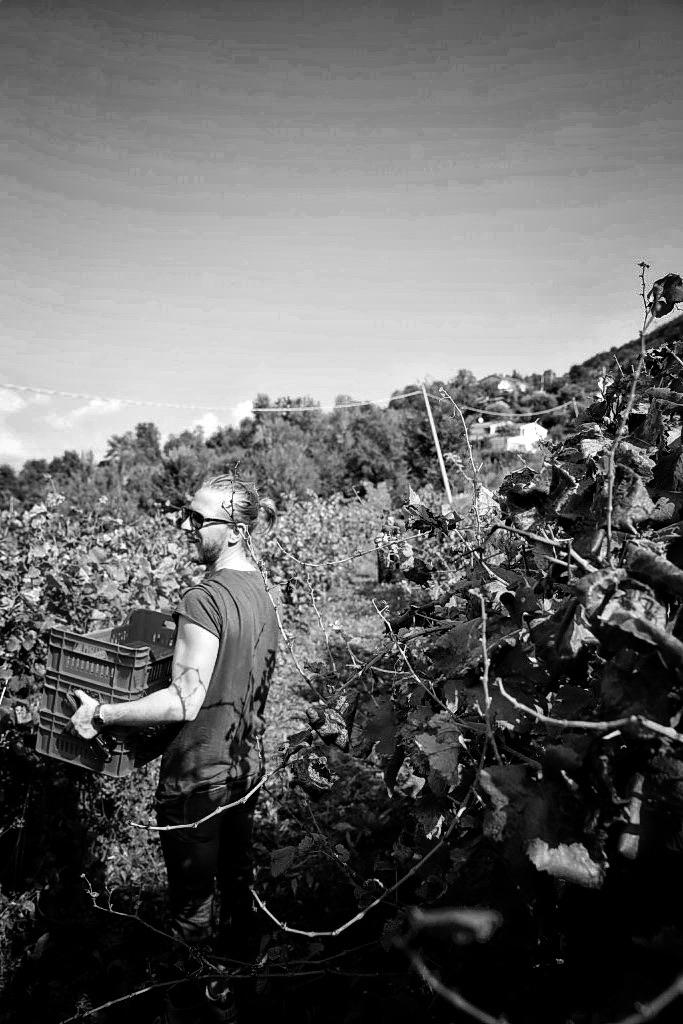 foto Evento Wine Embassy – Vendemmia Maraveja 15 sett. 19