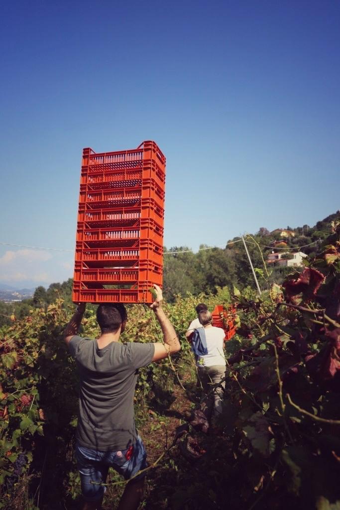 foto Evento Wine Embassy – Vendemmia Maraveja 15 sett. 20