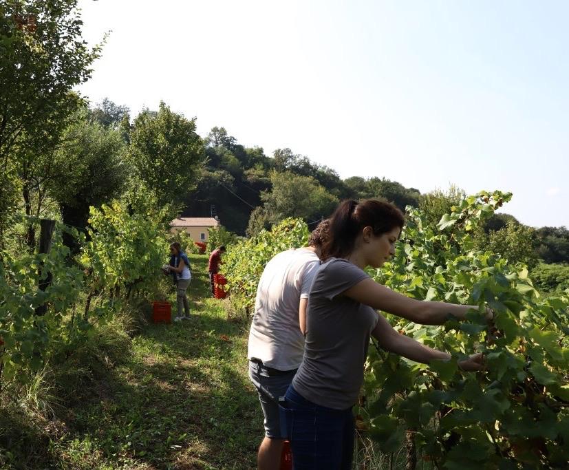 foto Evento Wine Embassy – Vendemmia Maraveja 15 sett. 21