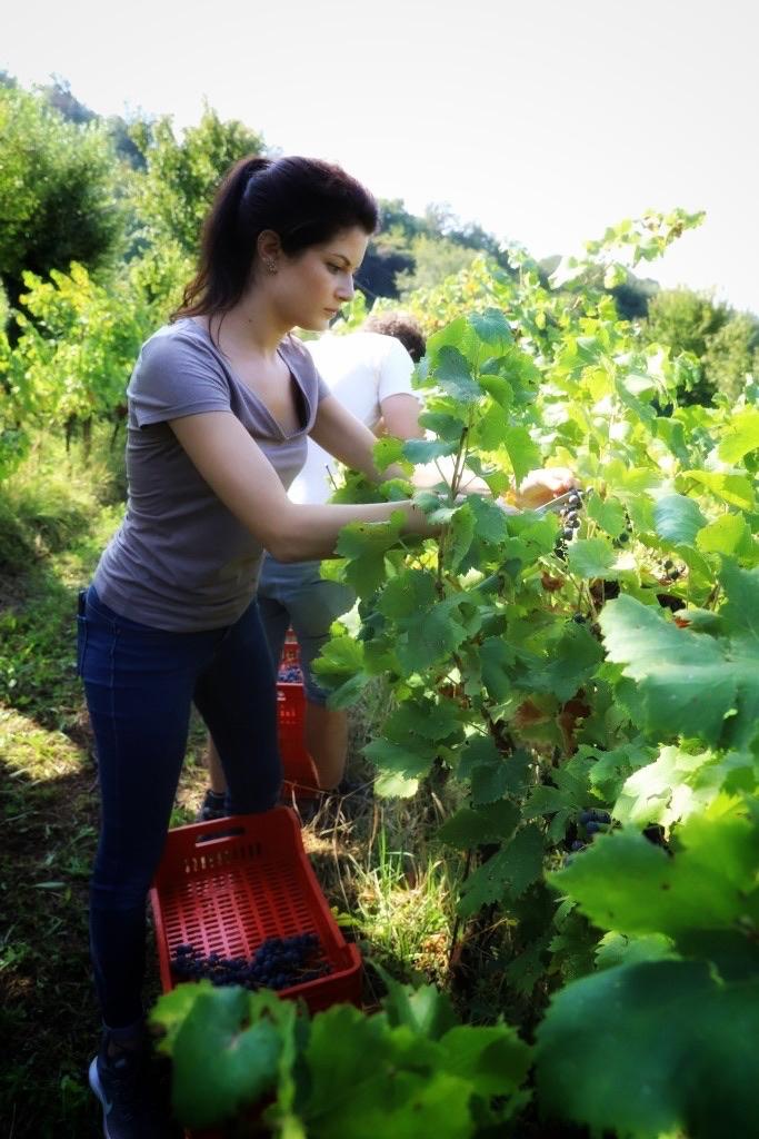foto Evento Wine Embassy – Vendemmia Maraveja 15 sett. 22