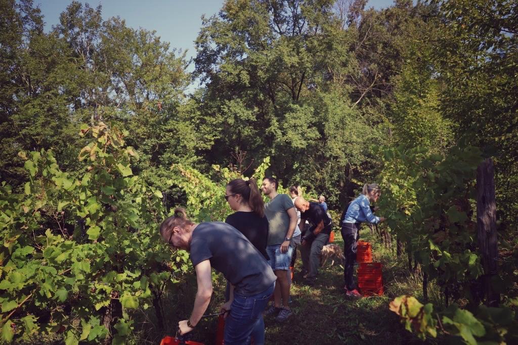 foto Evento Wine Embassy – Vendemmia Maraveja 15 sett. 23