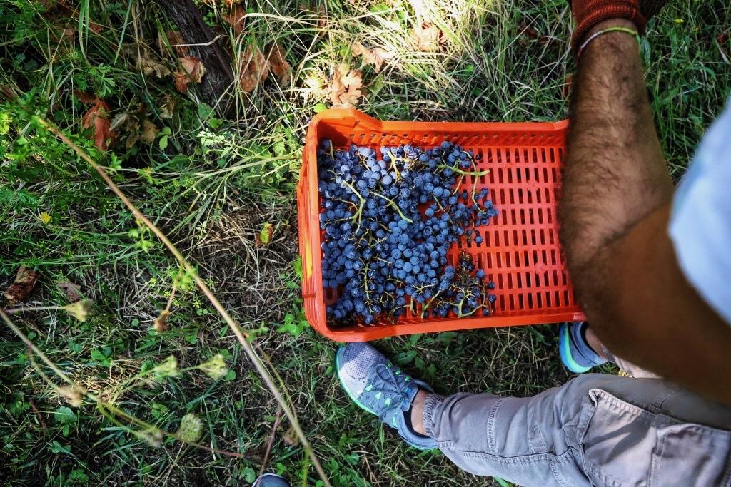 foto Evento Wine Embassy – Vendemmia Maraveja 15 sett. 24