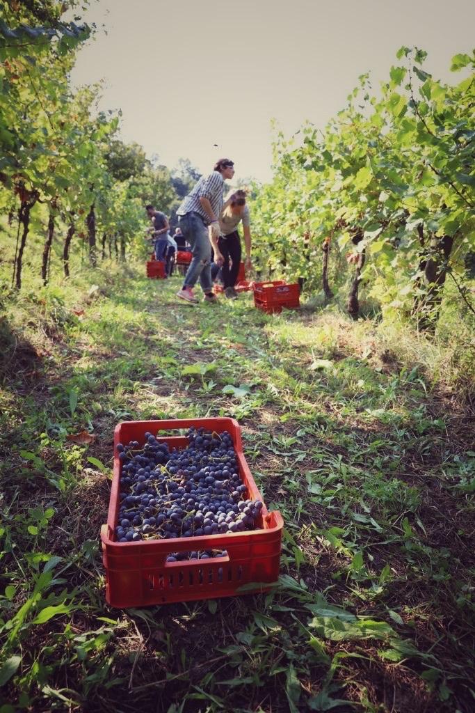 foto Evento Wine Embassy – Vendemmia Maraveja 15 sett. 29