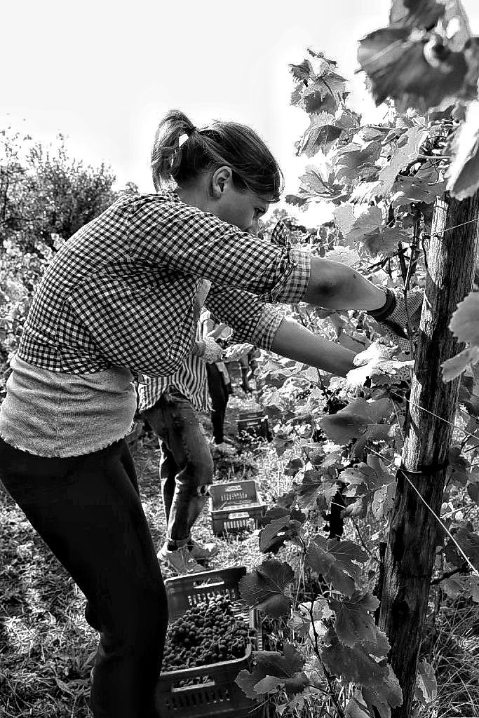 foto Evento Wine Embassy – Vendemmia Maraveja 15 sett. 31