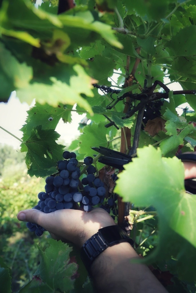 foto Evento Wine Embassy – Vendemmia Maraveja 15 sett. 35