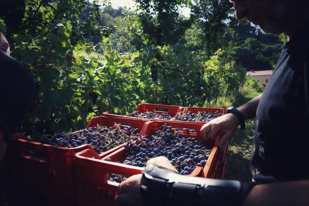 foto Evento Wine Embassy – Vendemmia Maraveja 15 sett. 36