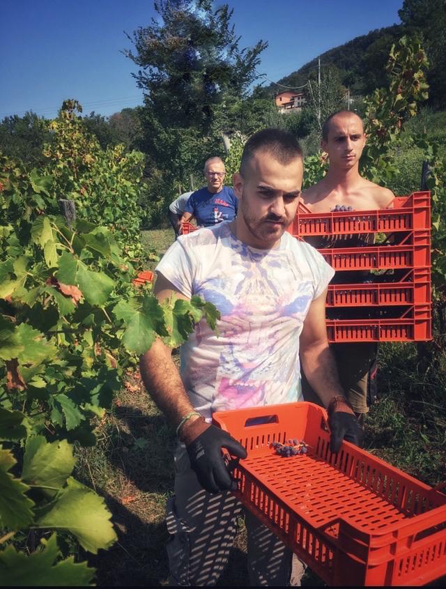 foto Evento Wine Embassy – Vendemmia Maraveja 15 sett. 4
