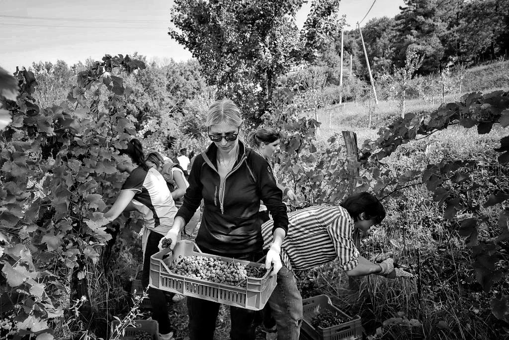 foto Evento Wine Embassy – Vendemmia Maraveja 15 sett. 41