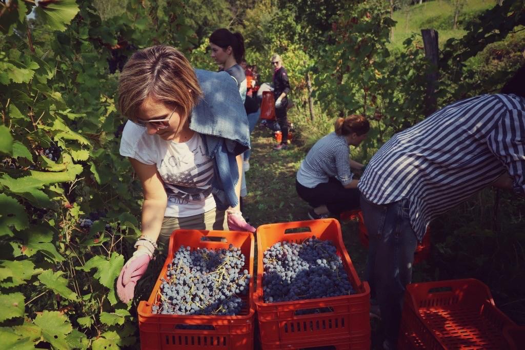foto Evento Wine Embassy – Vendemmia Maraveja 15 sett. 42
