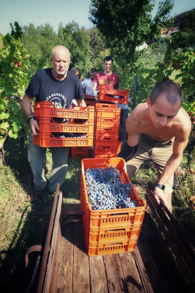 foto Evento Wine Embassy – Vendemmia Maraveja 15 sett. 43