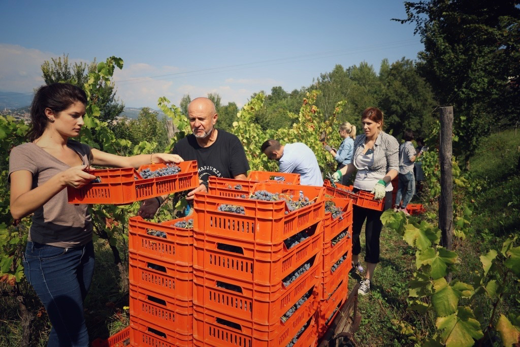 foto Evento Wine Embassy – Vendemmia Maraveja 15 sett. 45