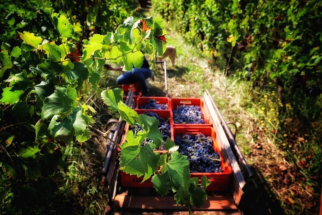 foto Evento Wine Embassy – Vendemmia Maraveja 15 sett. 47