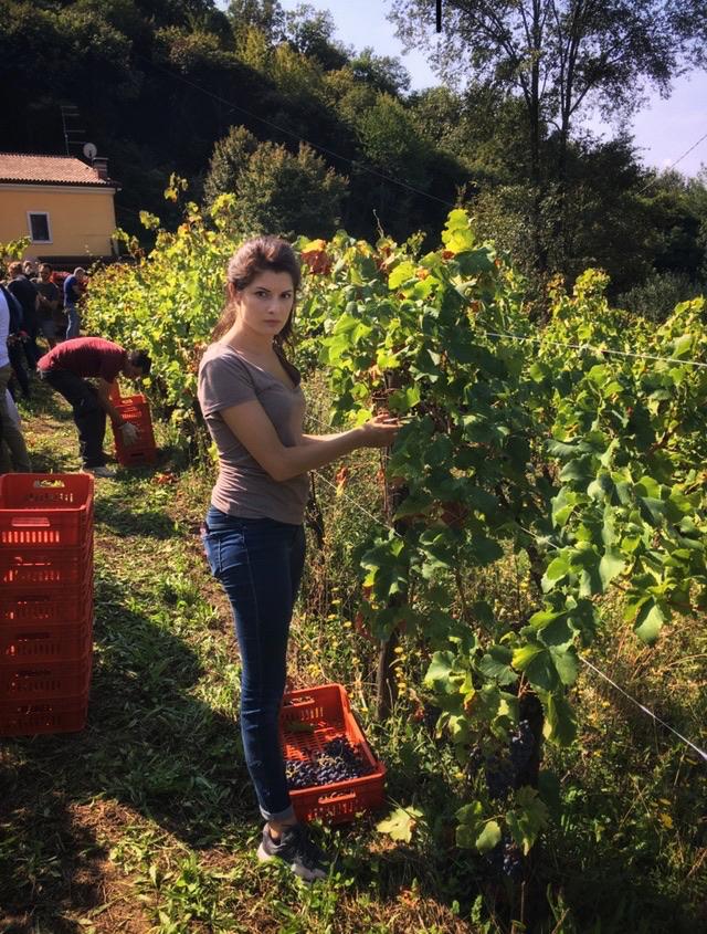 foto Evento Wine Embassy – Vendemmia Maraveja 15 sett. 6