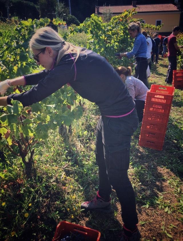 foto Evento Wine Embassy – Vendemmia Maraveja 15 sett. 7