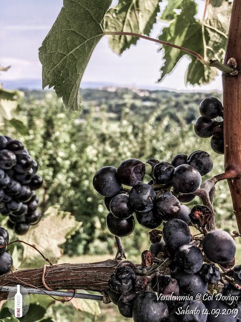 foto Evento Wine Embassy – Vendemmia @ Col Dovigo 14.09.2019 37