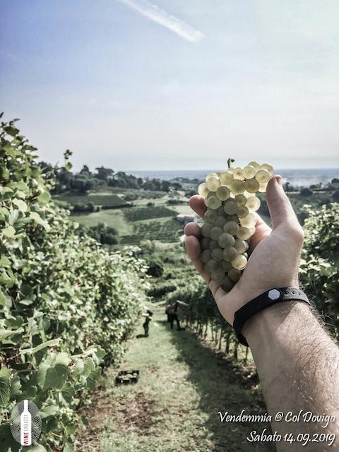foto Evento Wine Embassy – Vendemmia @ Col Dovigo 14.09.2019 40