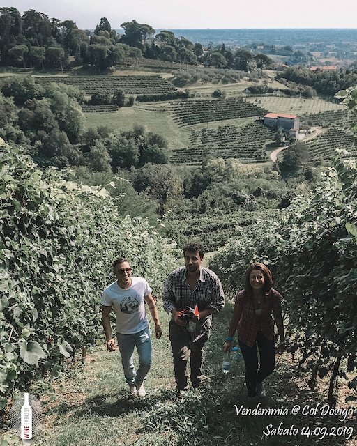 foto Evento Wine Embassy – Vendemmia @ Col Dovigo 14.09.2019 41