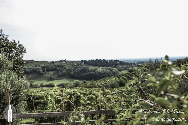 foto Evento Wine Embassy – Vendemmia @ Col Dovigo 14.09.2019 60