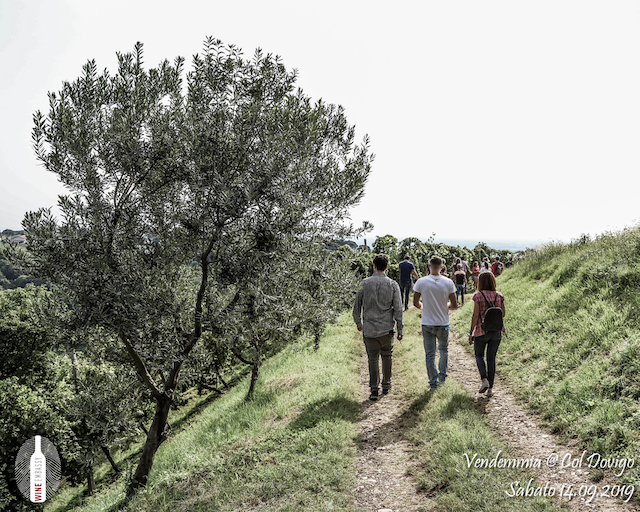 foto Evento Wine Embassy – Vendemmia @ Col Dovigo 14.09.2019 66