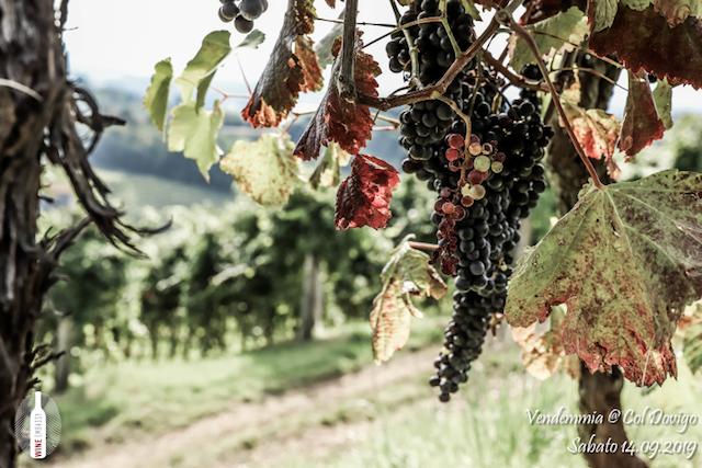 foto Evento Wine Embassy – Vendemmia @ Col Dovigo 14.09.2019 67