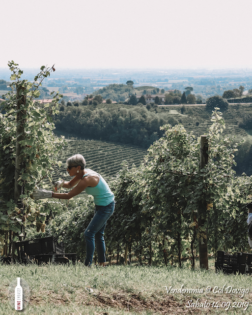 foto Evento Wine Embassy – Vendemmia @ Col Dovigo 14.09.2019 72