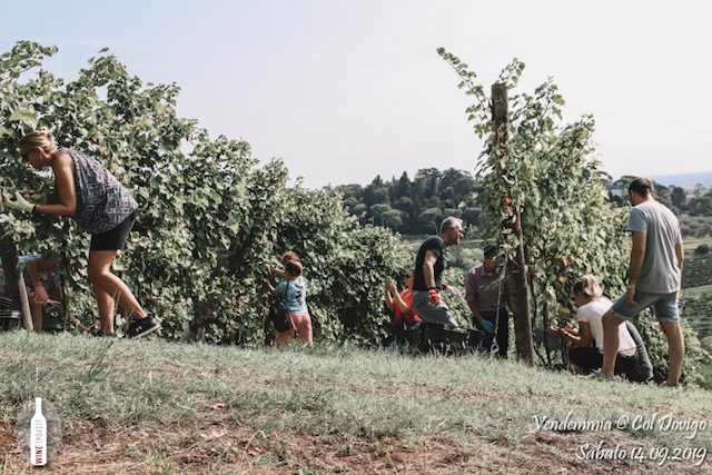 foto Evento Wine Embassy – Vendemmia @ Col Dovigo 14.09.2019 73
