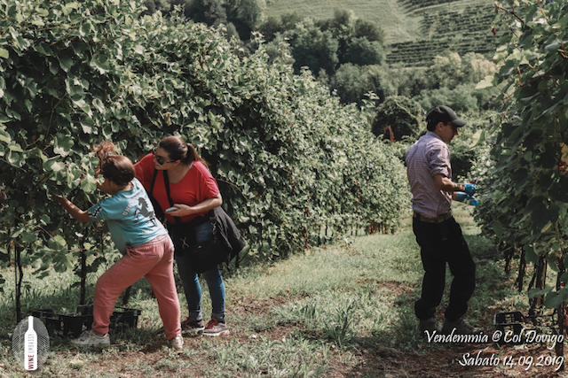 foto Evento Wine Embassy – Vendemmia @ Col Dovigo 14.09.2019 74