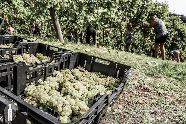 foto Evento Wine Embassy – Vendemmia @ Col Dovigo 14.09.2019 75