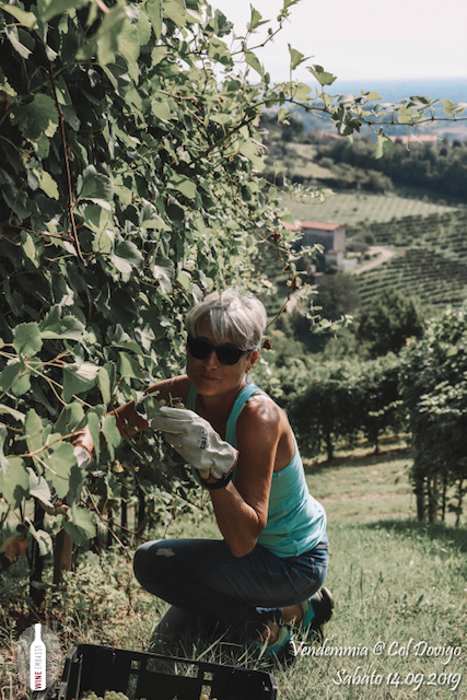 foto Evento Wine Embassy – Vendemmia @ Col Dovigo 14.09.2019 76