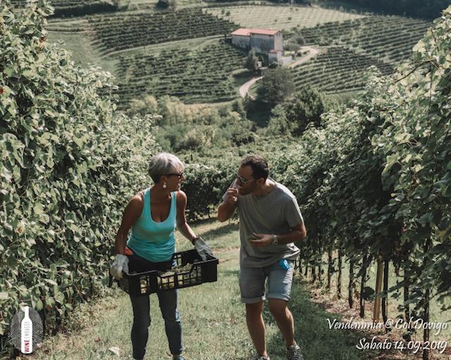 foto Evento Wine Embassy – Vendemmia @ Col Dovigo 14.09.2019 77