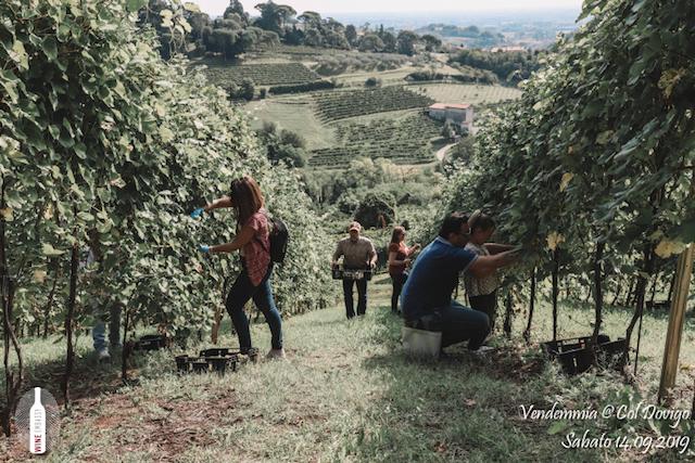 foto Evento Wine Embassy – Vendemmia @ Col Dovigo 14.09.2019 80