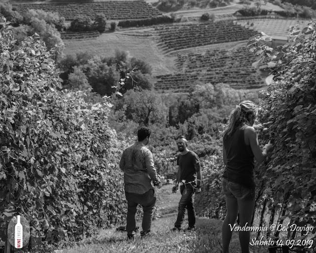 foto Evento Wine Embassy – Vendemmia @ Col Dovigo 14.09.2019 82