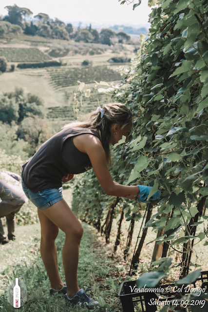 foto Evento Wine Embassy – Vendemmia @ Col Dovigo 14.09.2019 83