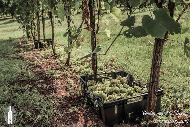 foto Evento Wine Embassy – Vendemmia @ Col Dovigo 14.09.2019 93