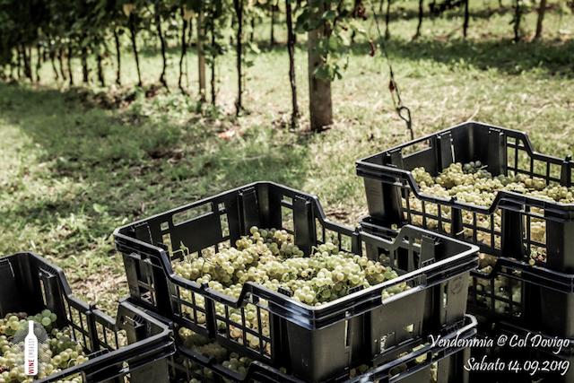 foto Evento Wine Embassy – Vendemmia @ Col Dovigo 14.09.2019 95