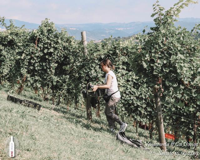 foto Evento Wine Embassy – Vendemmia @ Col Dovigo 14.09.2019 96