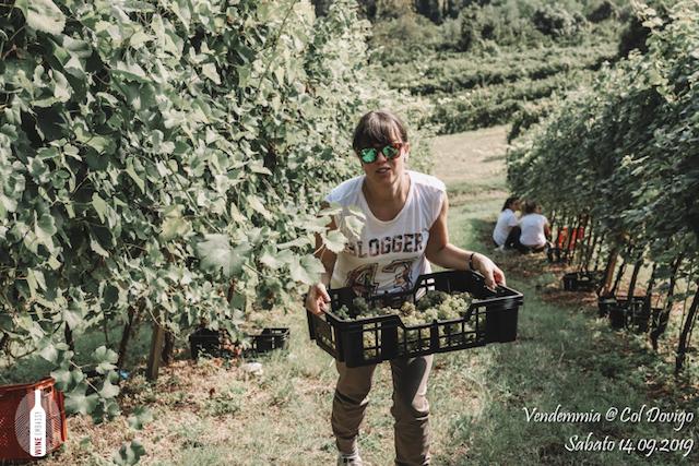 foto Evento Wine Embassy – Vendemmia @ Col Dovigo 14.09.2019 97