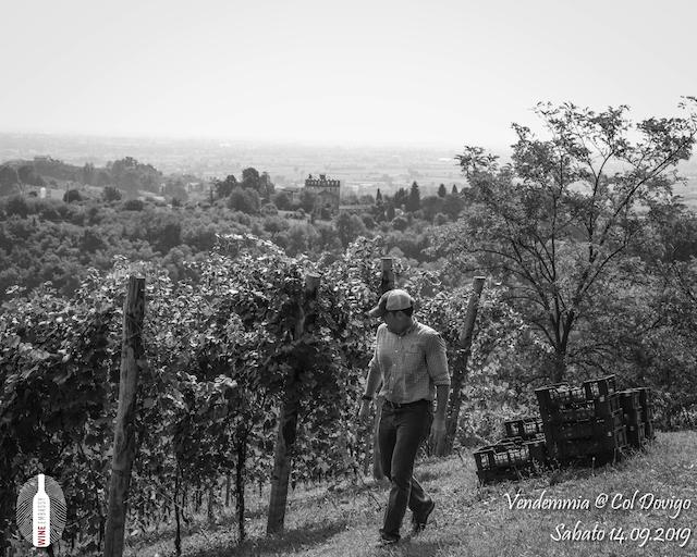 foto Evento Wine Embassy – Vendemmia @ Col Dovigo 14.09.2019 98