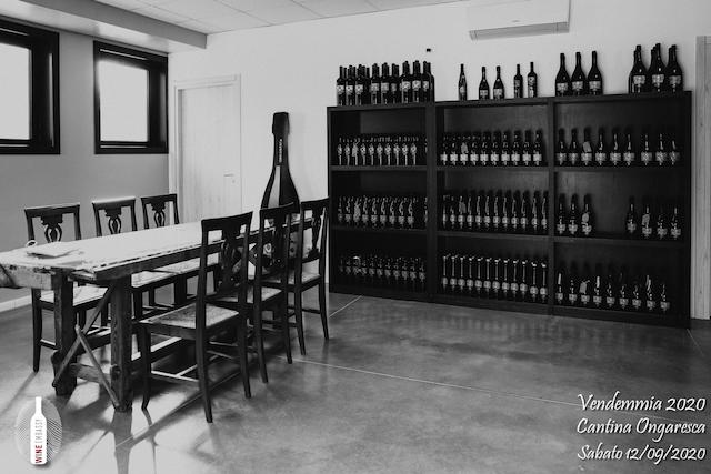 foto Evento Wine Embassy – Vendemmia @ Cantina Ongaresca 12 Settembre 2020 – – 1