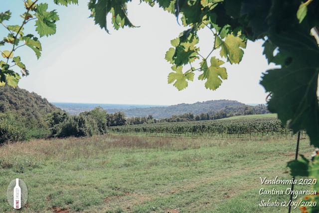 foto Evento Wine Embassy – Vendemmia @ Cantina Ongaresca 12 Settembre 2020 – – 10