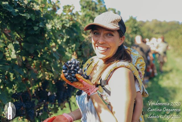 foto Evento Wine Embassy – Vendemmia @ Cantina Ongaresca 12 Settembre 2020 – – 21
