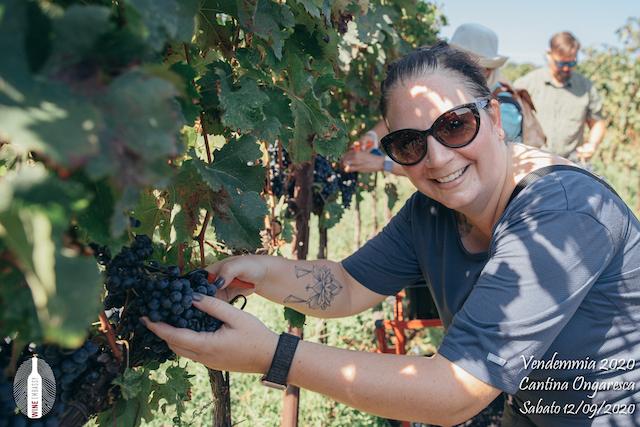 foto Evento Wine Embassy – Vendemmia @ Cantina Ongaresca 12 Settembre 2020 – – 23
