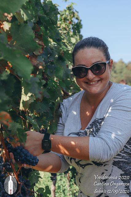 foto Evento Wine Embassy – Vendemmia @ Cantina Ongaresca 12 Settembre 2020 – – 30