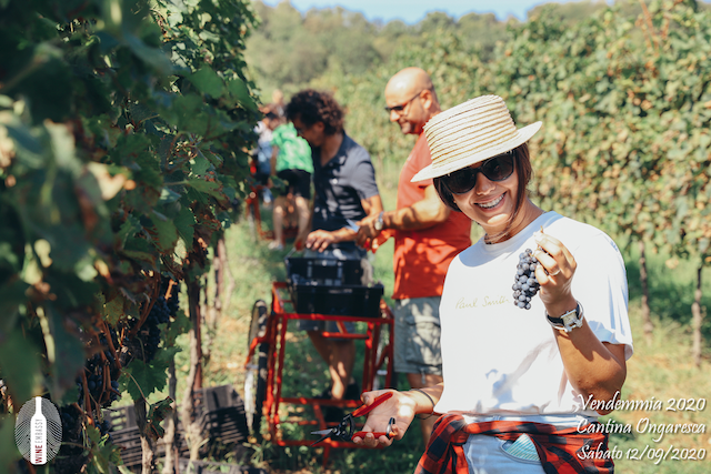 foto Evento Wine Embassy – Vendemmia @ Cantina Ongaresca 12 Settembre 2020 – – 32
