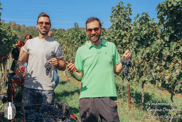 foto Evento Wine Embassy – Vendemmia @ Cantina Ongaresca 12 Settembre 2020 – – 36